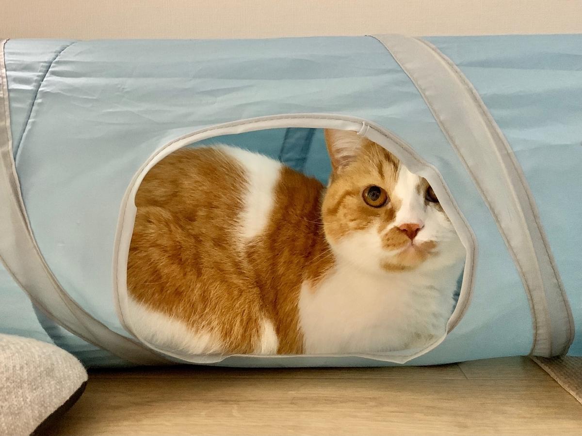 トンネルの中からのぞくるるちゃん