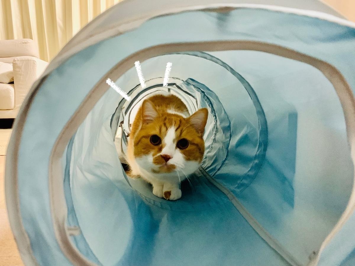 トンネルにたてこもるるるちゃん2