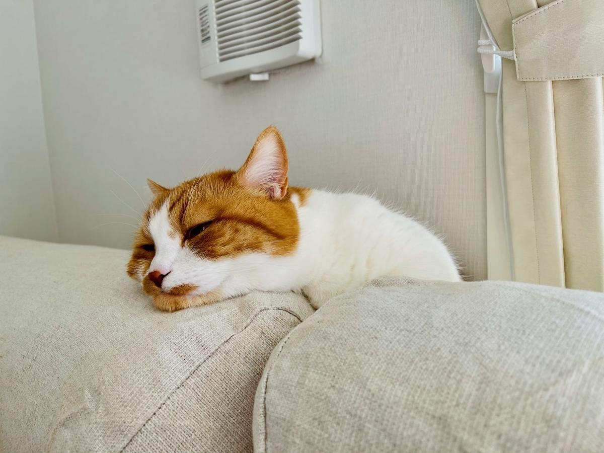 ソファの間で寝ちゃうるるちゃん1