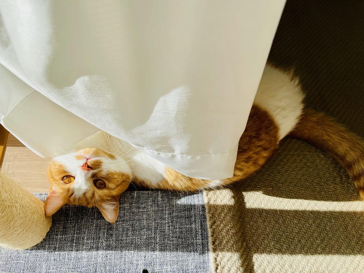 カーテンの中でお昼寝中のるるちゃん3