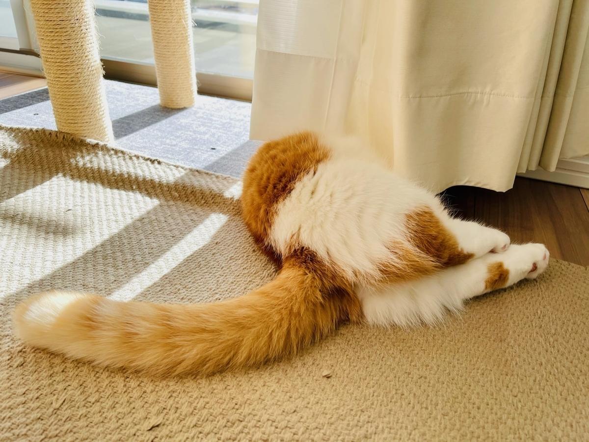 カーテンの中でお昼寝中のるるちゃん5