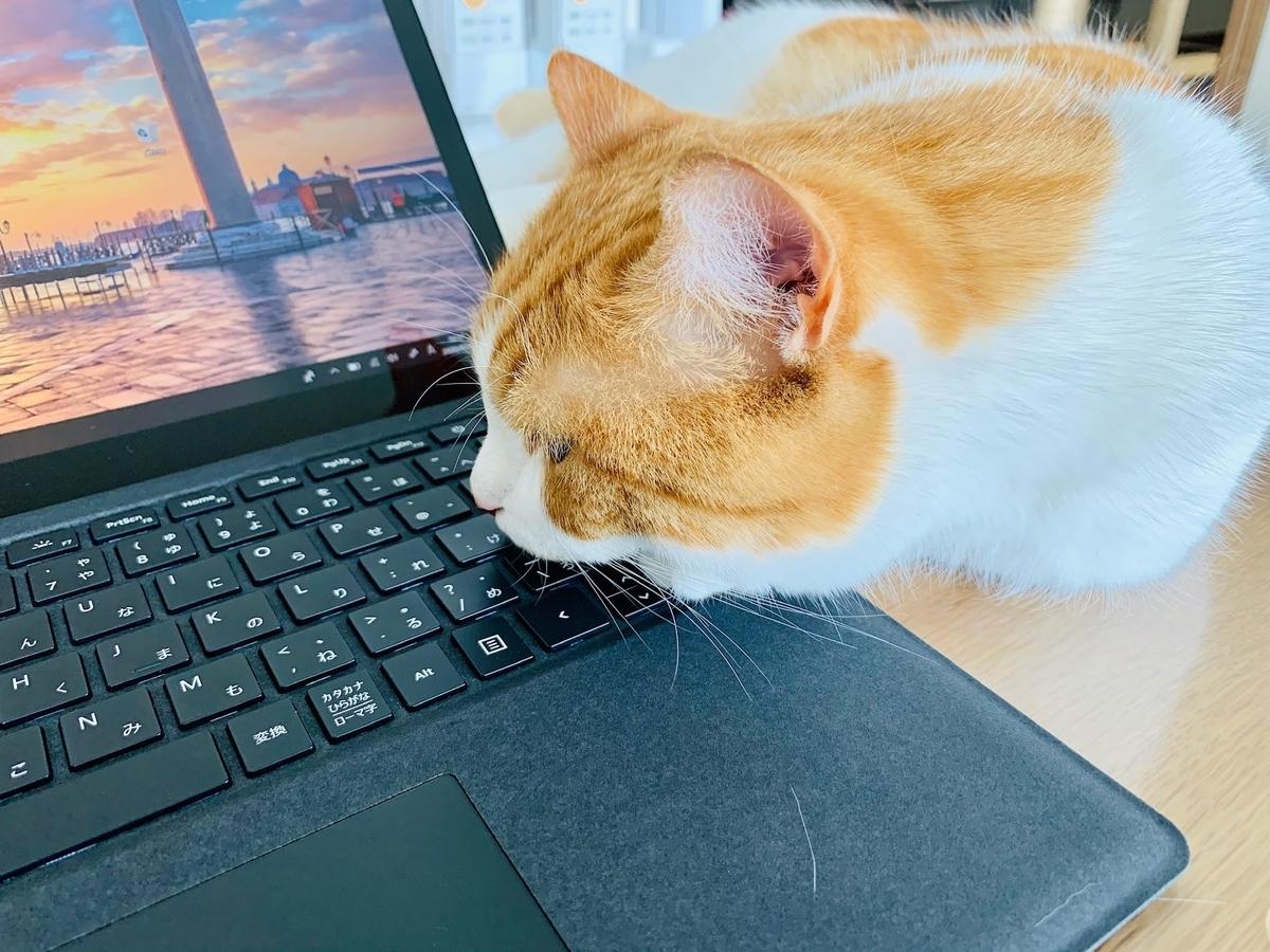 パソコンの上にあごをおくるるちゃん