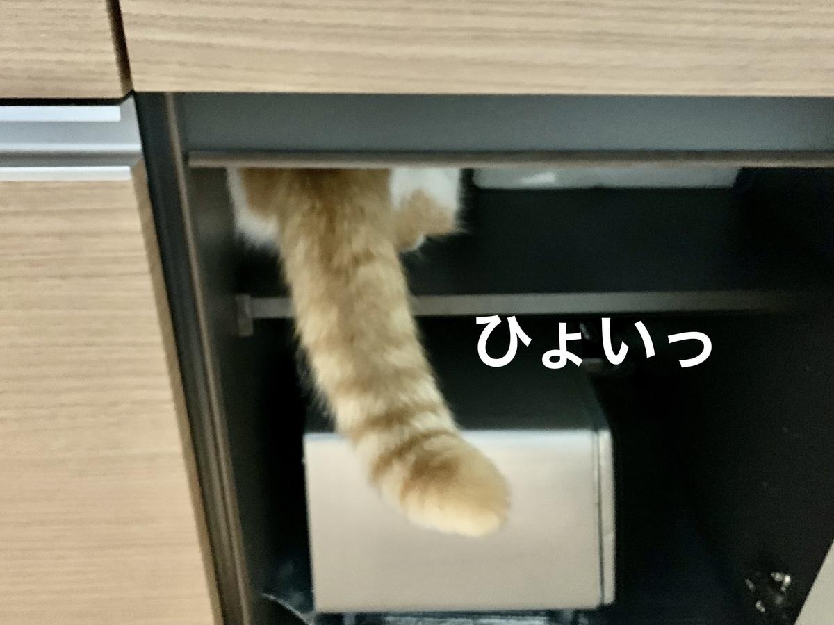 トースターのコーナーから見つめるるるちゃん1