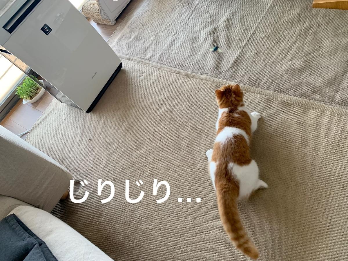 新しいおもちゃで遊ぶるるちゃん1