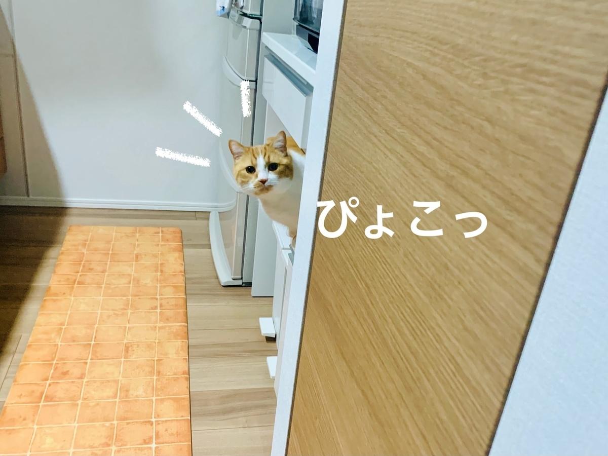 キッチンからのぞくるるちゃん2
