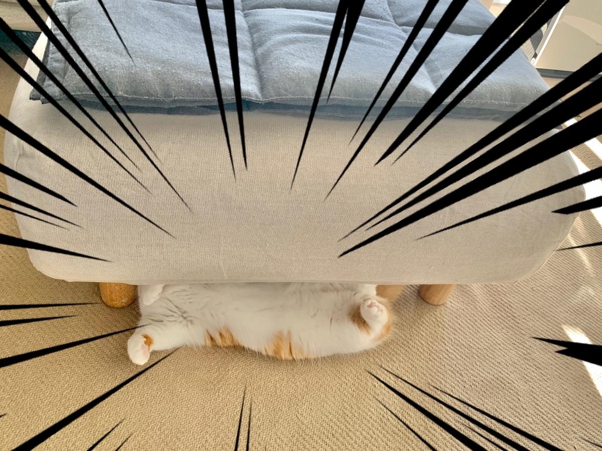 ソファの下に隠れるるるちゃん2