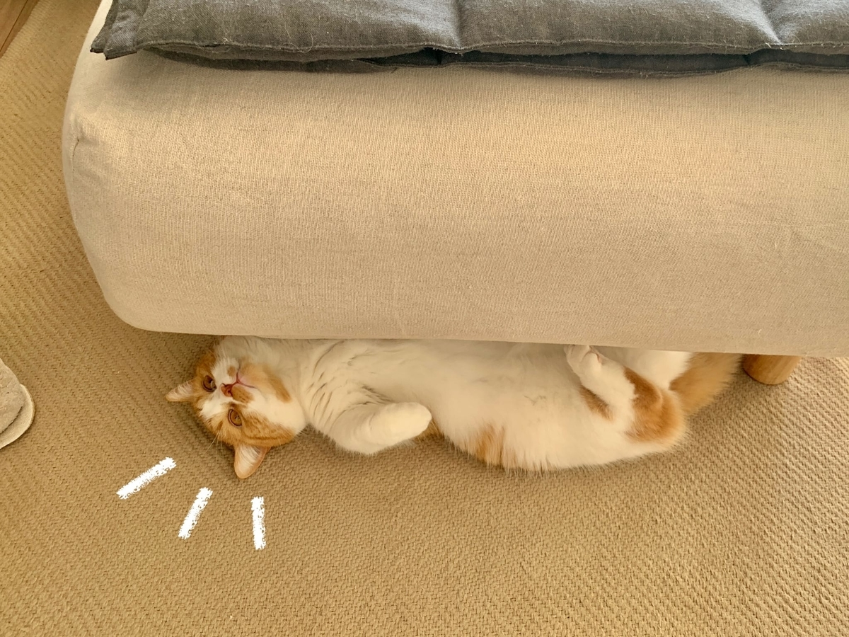 ソファの下に隠れるるるちゃん4