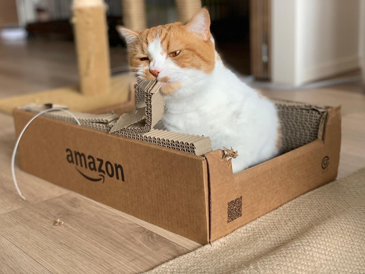 Amazonの爪とぎをかじるるるちゃん
