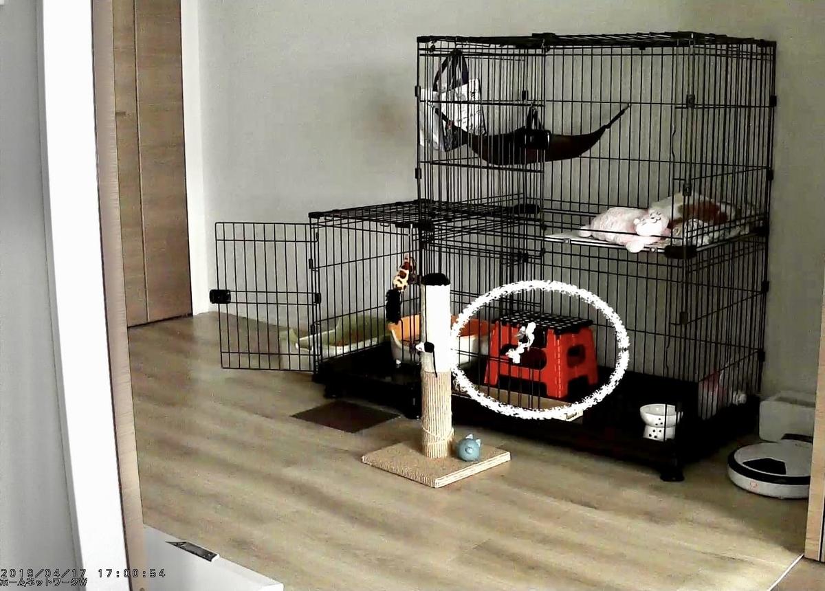 子猫時代のるるちゃんのケージ2