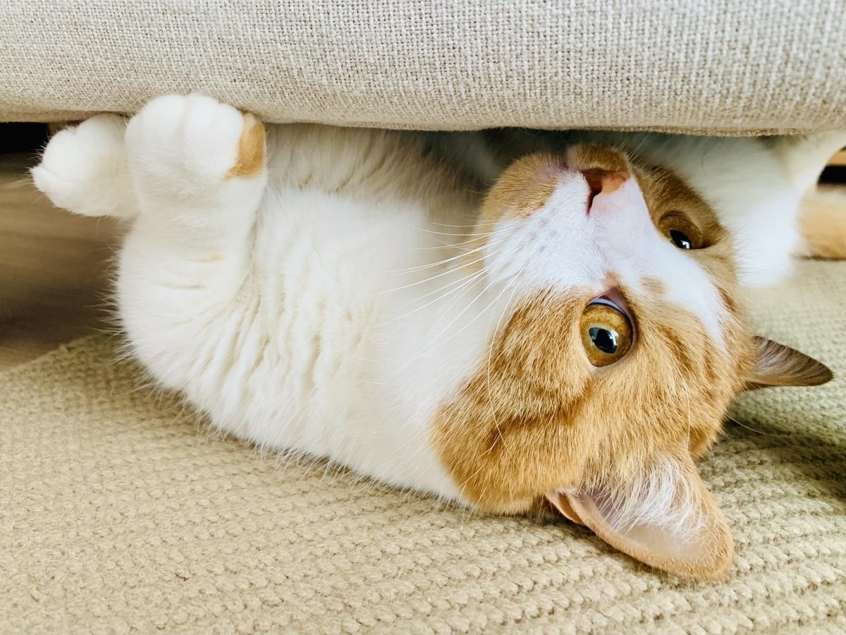 ソファの下に隠れるるるちゃん1