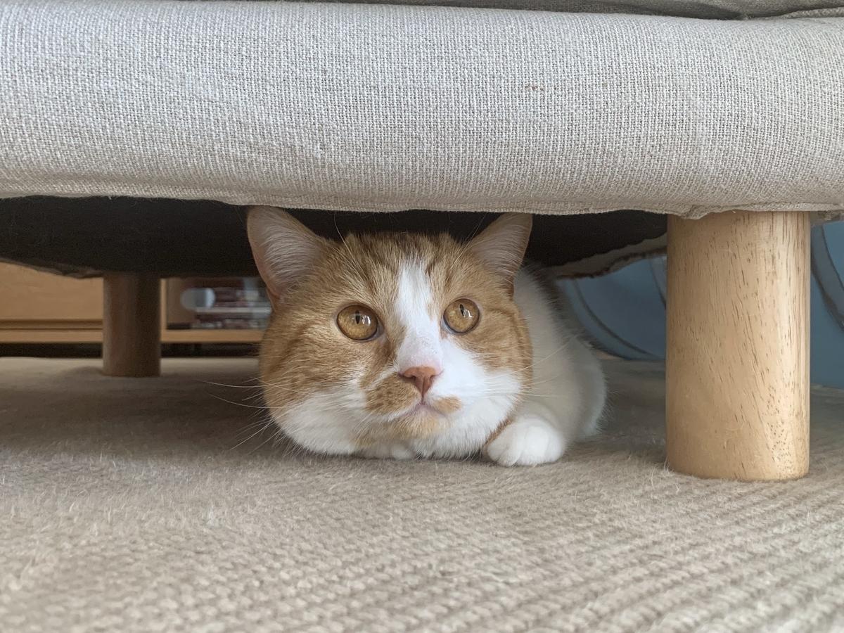 ソファの下に潜るるるちゃん2