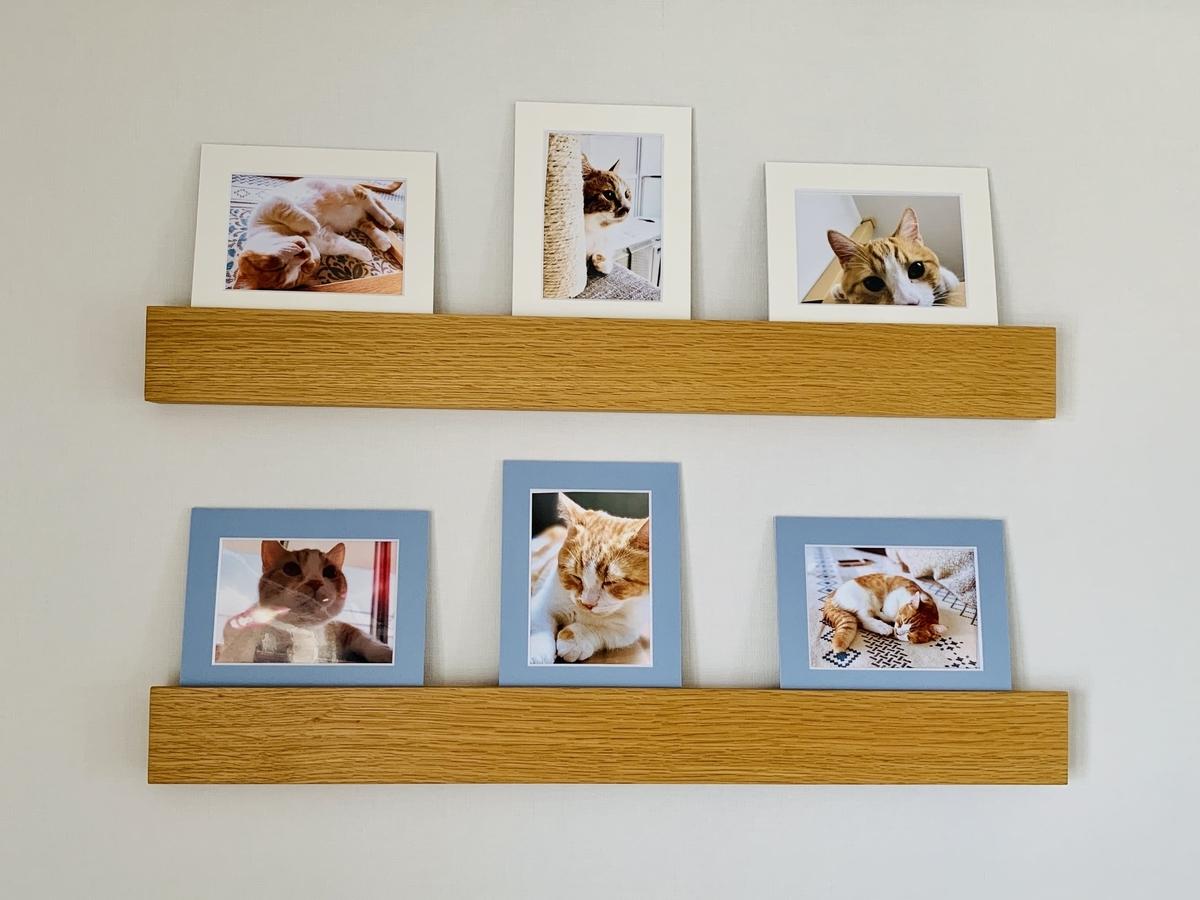 壁に飾ったるるちゃんの写真コーナー