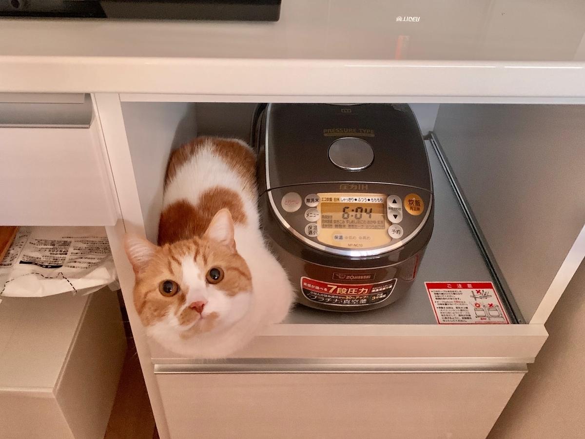 炊飯器の隣のるるちゃん