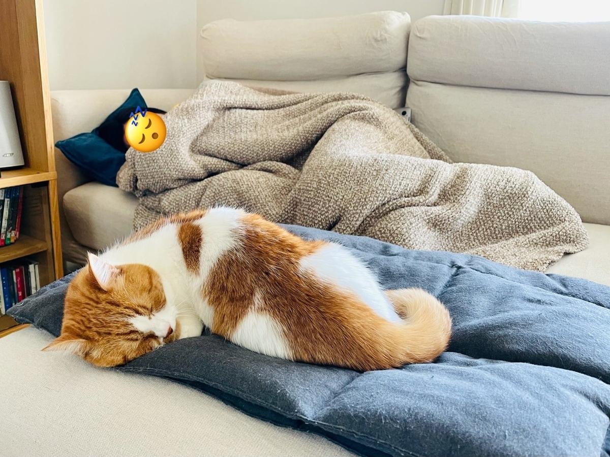 飼い主と一緒にお昼寝するるるちゃん2