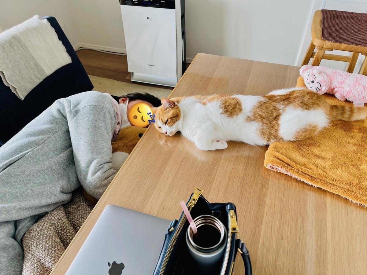 飼い主と一緒にお昼寝するるるちゃん3