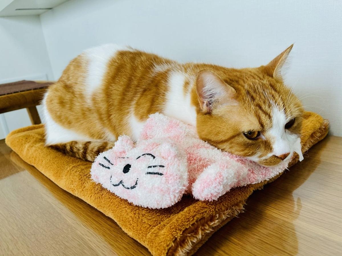 ピンク猫さんとくっつくるるちゃん