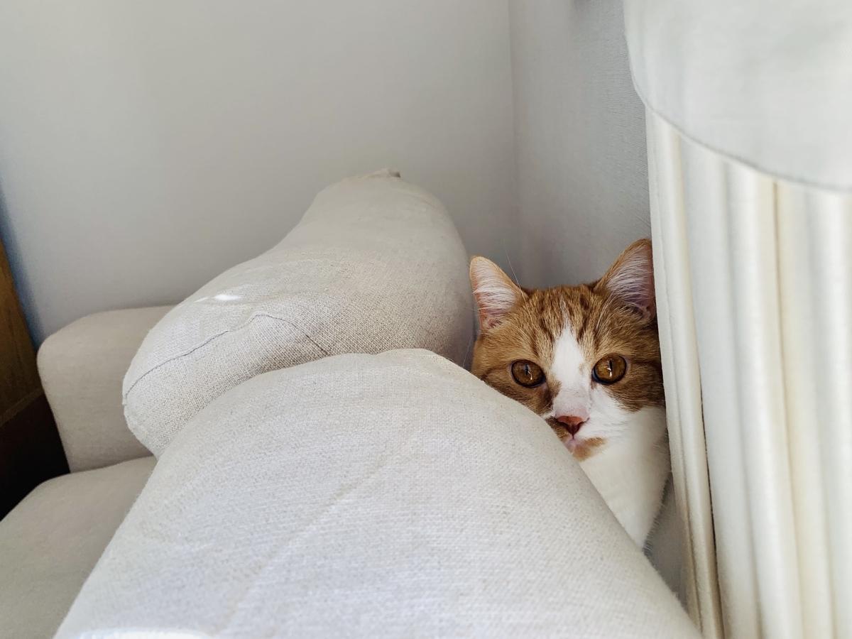 ソファの裏に隠れるるるちゃん