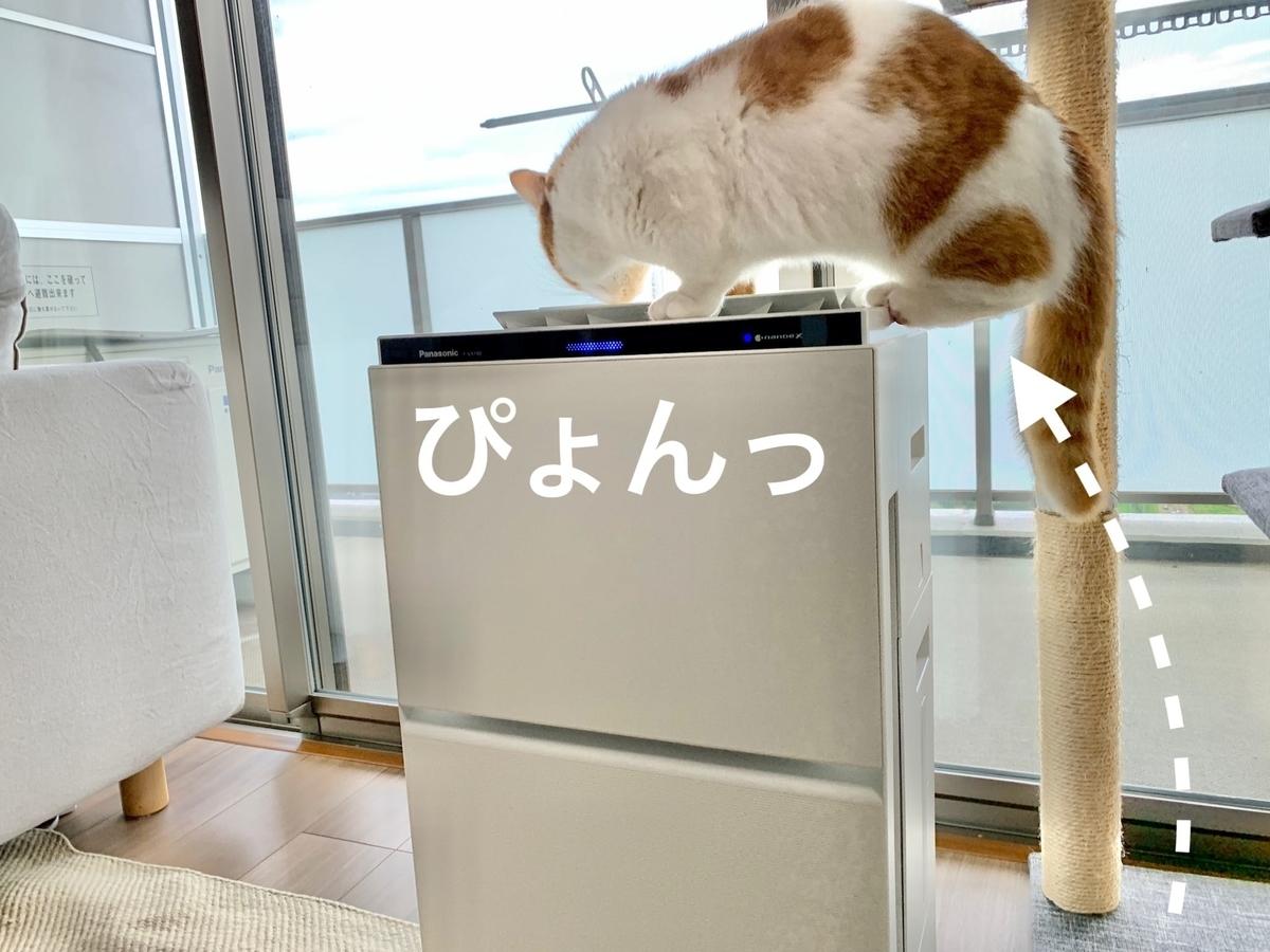 新しい空気清浄機とるるちゃん3
