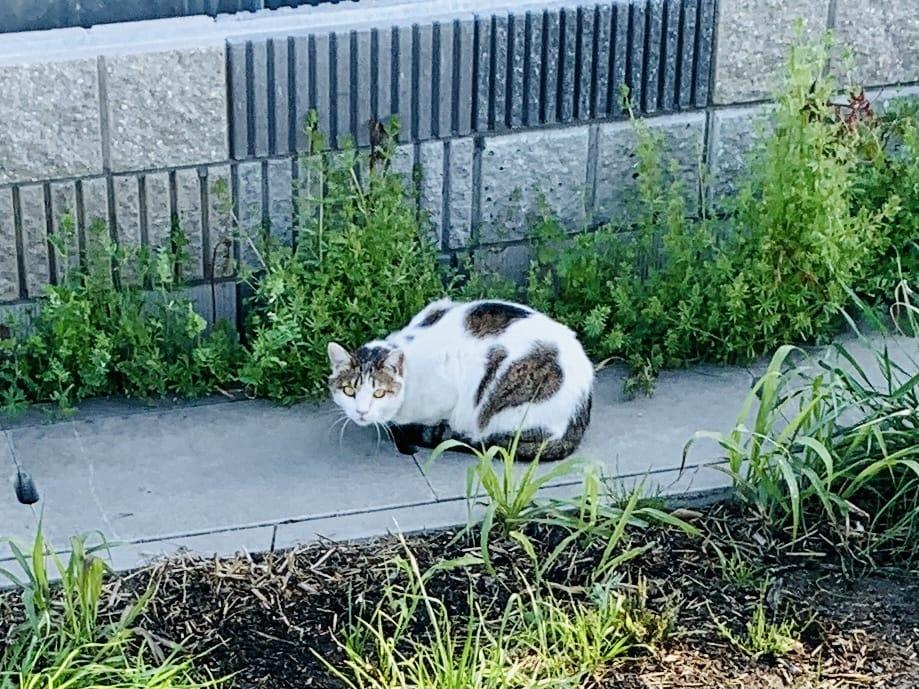 散歩道の途中の猫さん1