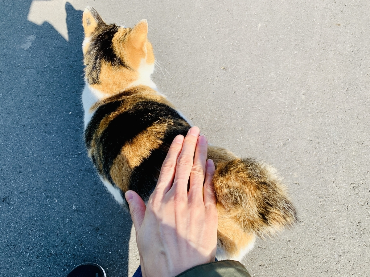 散歩道の途中の猫さん2