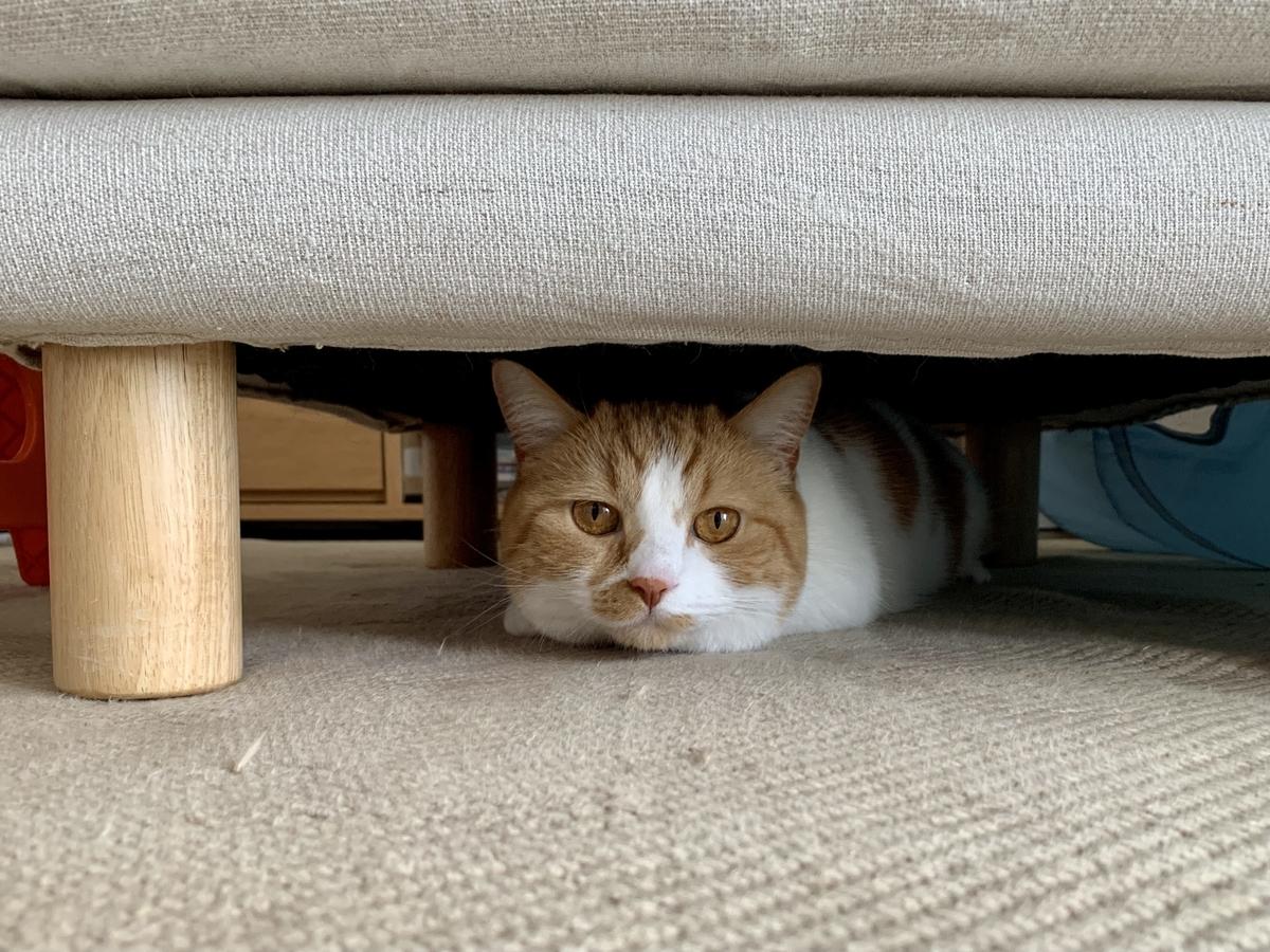 ソファの下に潜むるるちゃん