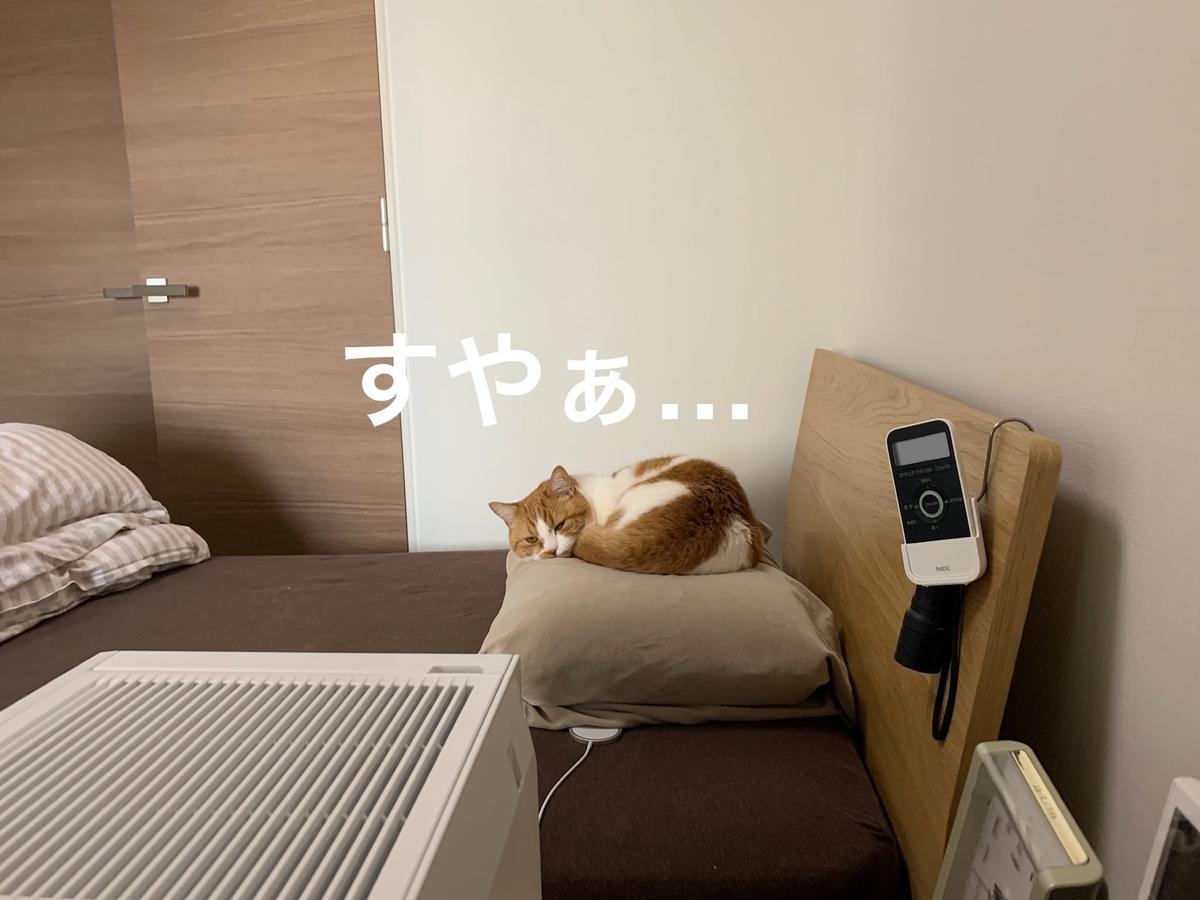 夫の枕の上のるるちゃん2