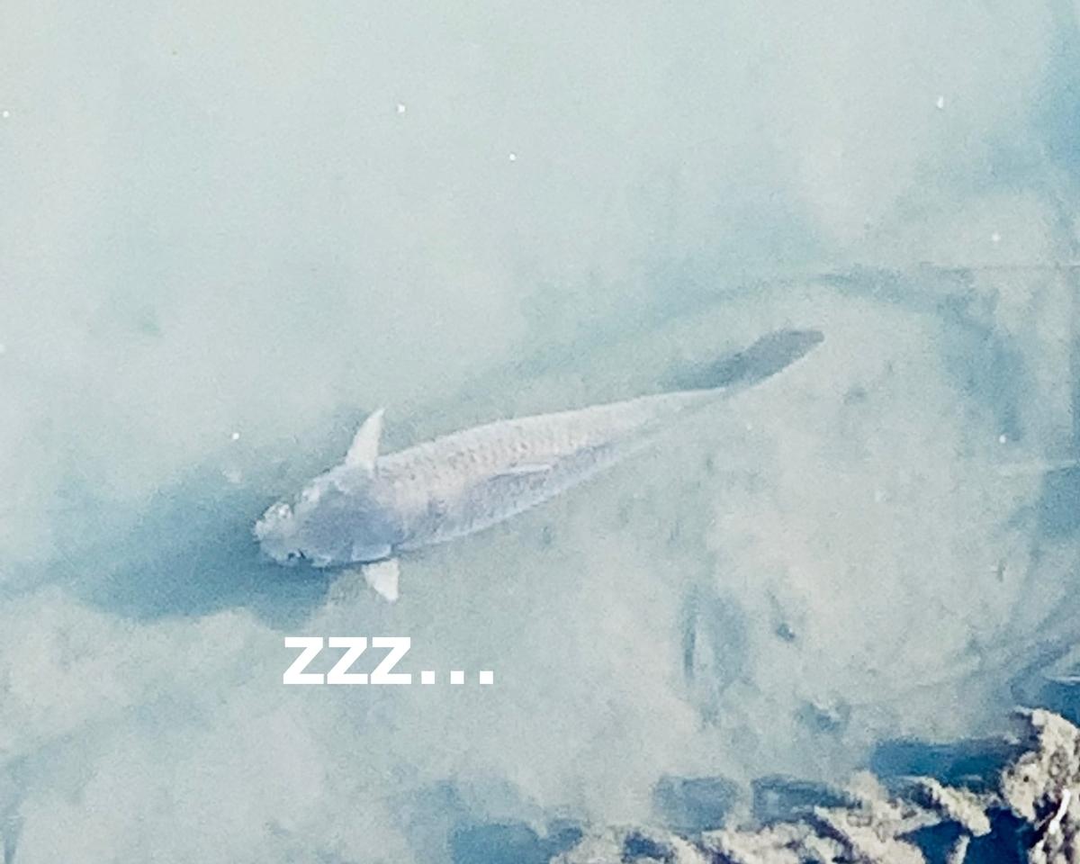 水の中で眠るお魚