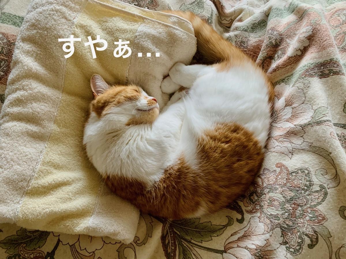 飼い主の布団の上でお昼寝するるるちゃん