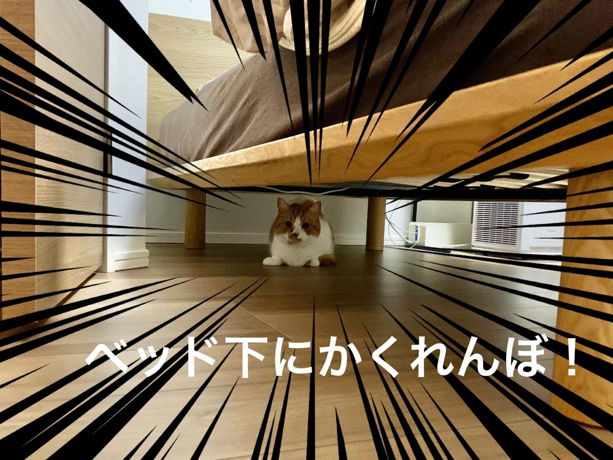 ベッド下に隠れるるるちゃん1