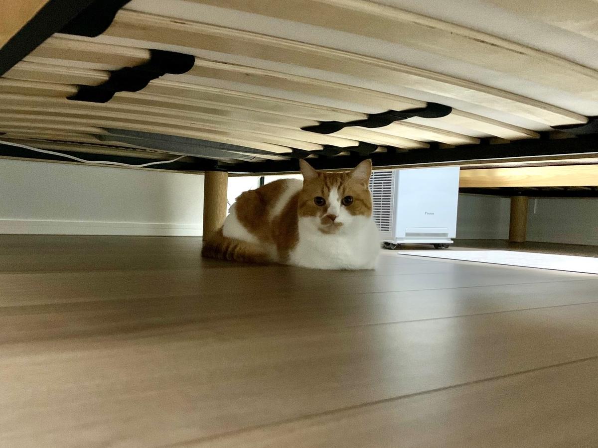 ベッド下に隠れるるるちゃん2