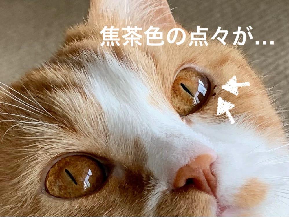 目やにがついたるるちゃん3
