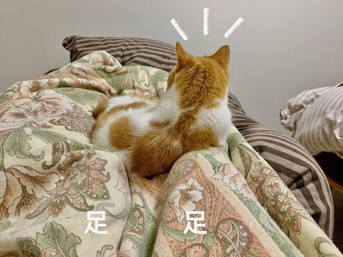 飼い主の足の上で寝るるるちゃん1