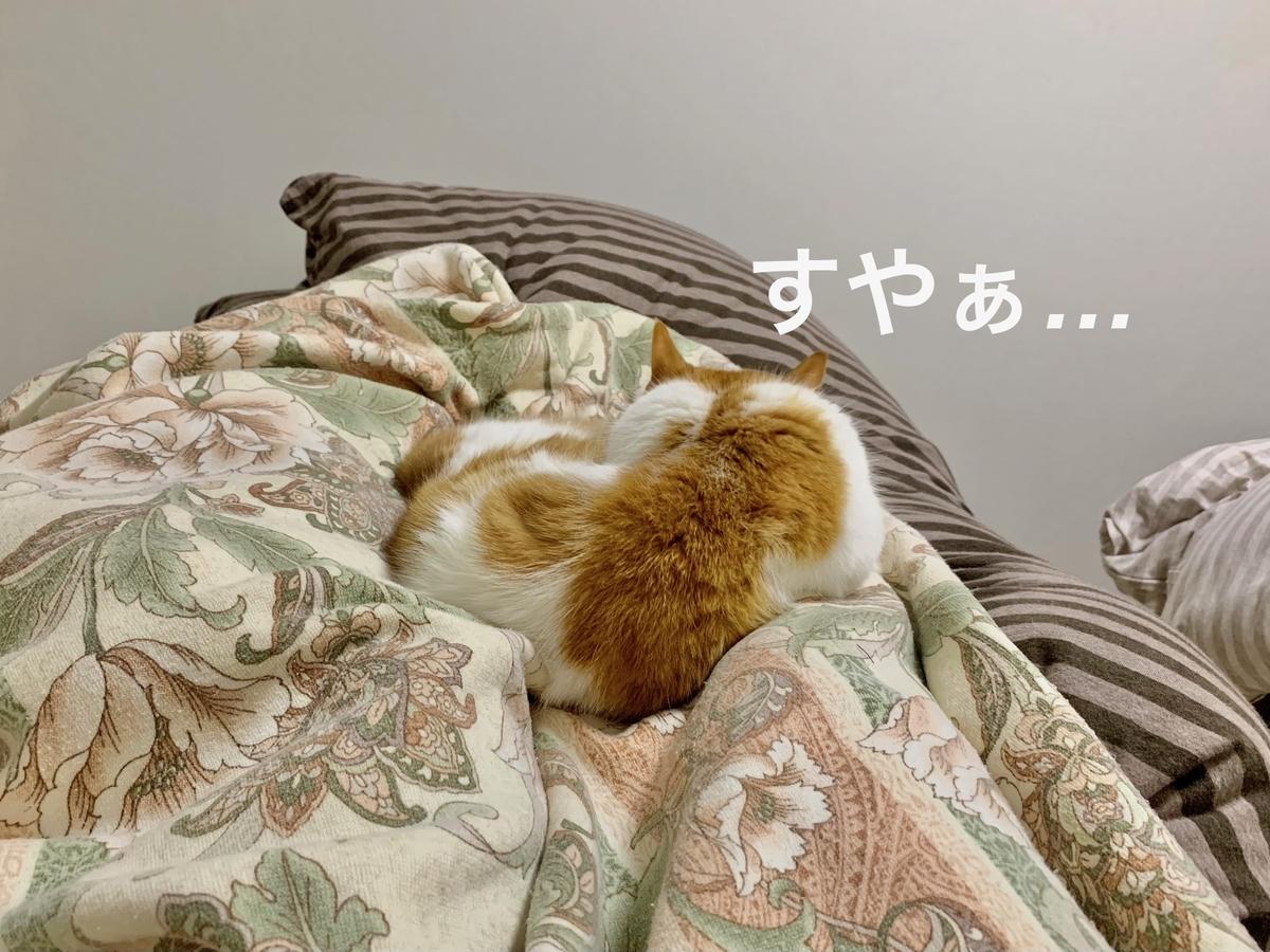 飼い主の足の上で寝るるるちゃん2