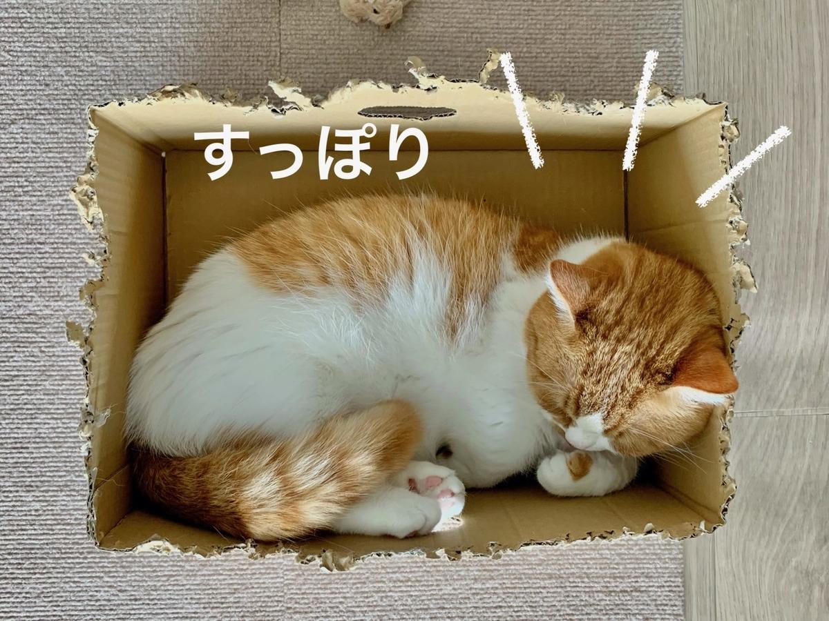 新しい箱に入るるるちゃん1