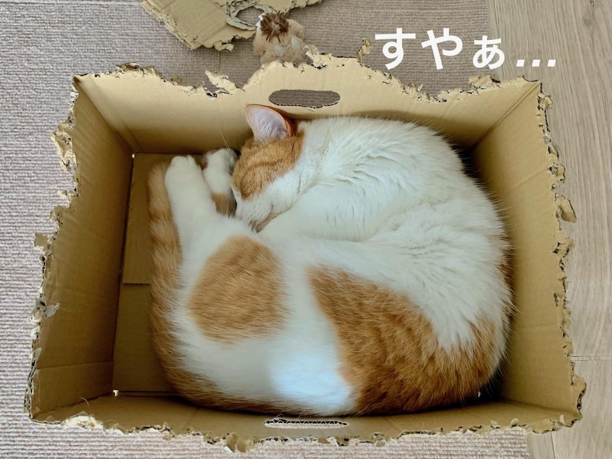 新しい箱に入るるるちゃん2