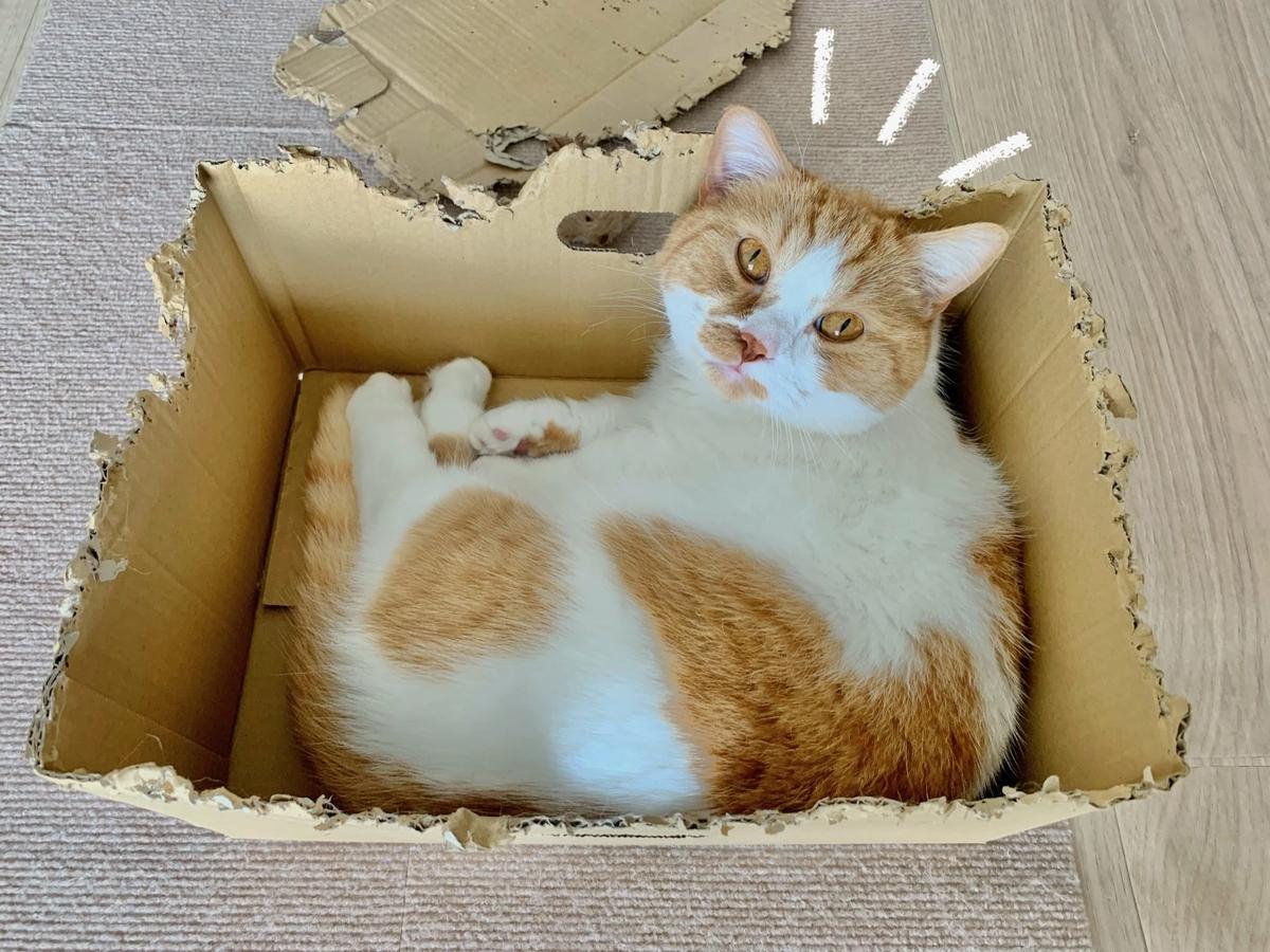新しい箱に入るるるちゃん3