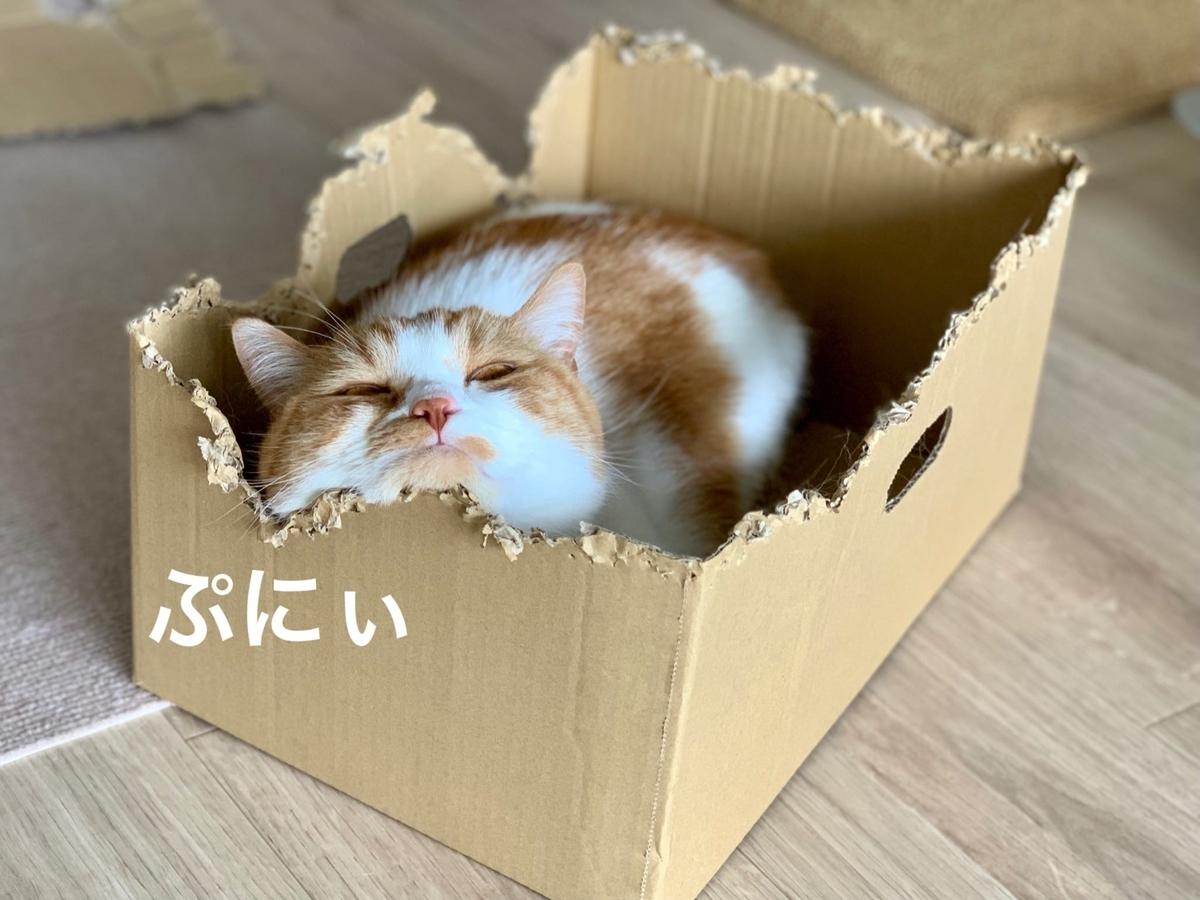 新しい箱に入るるるちゃん5