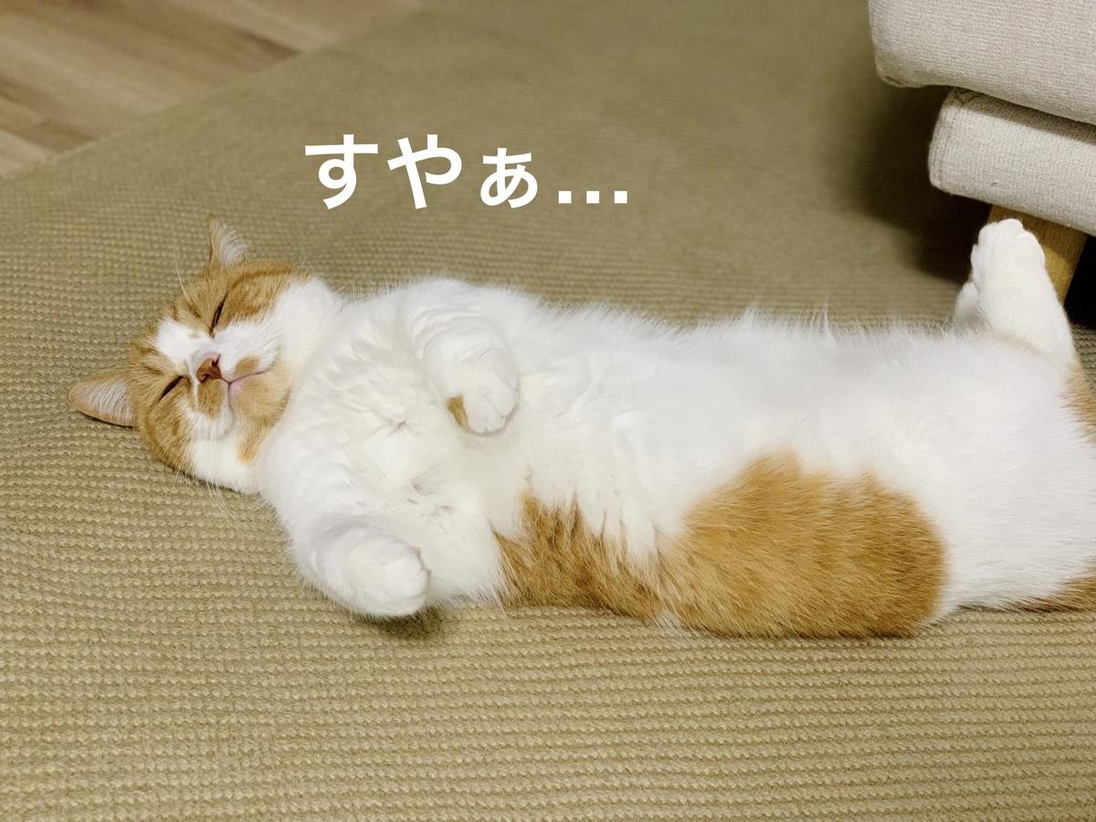 添い寝してくれる愛猫4