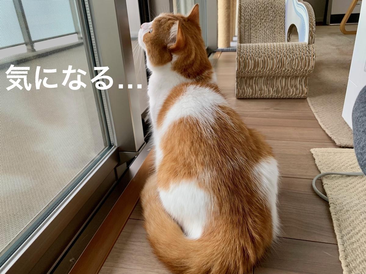 外を見つめるるるちゃん3