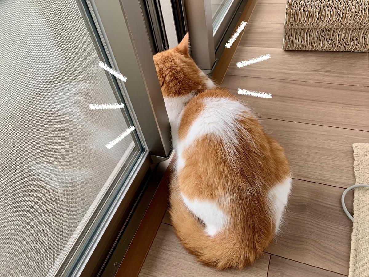 外を見つめるるるちゃん4