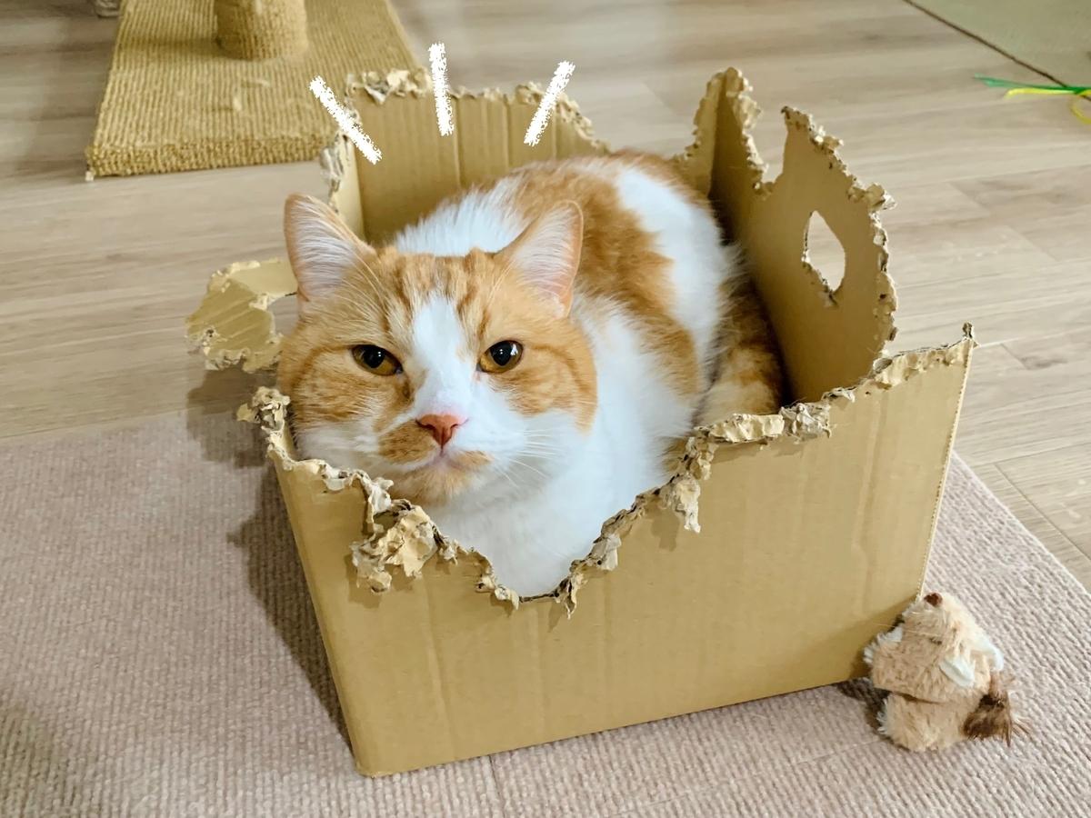 箱に入るるるちゃん1