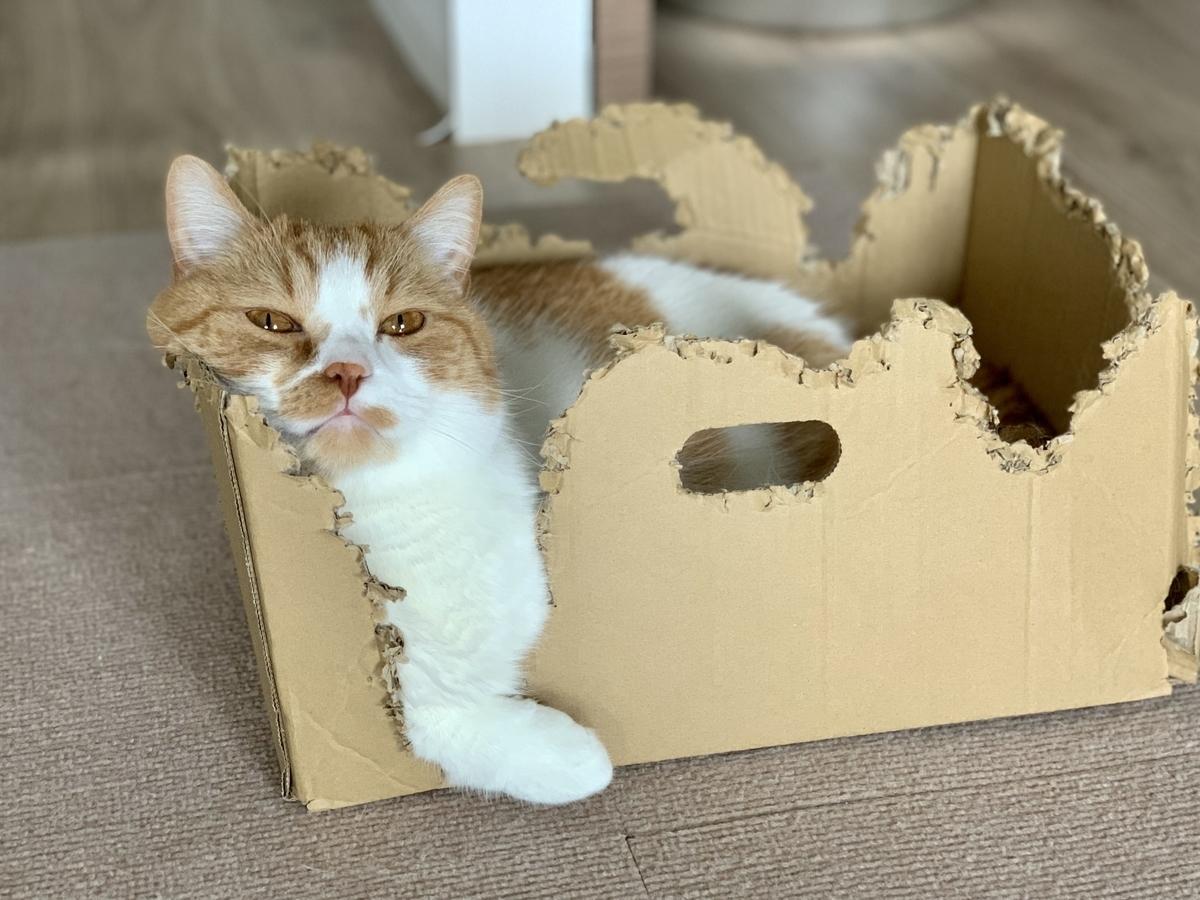 箱で満足げなるるちゃん