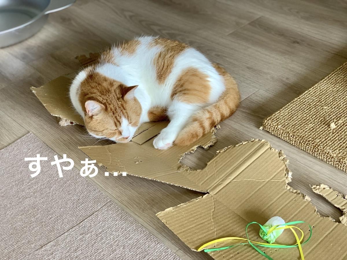 ボロボロの箱でお昼寝するるるちゃん