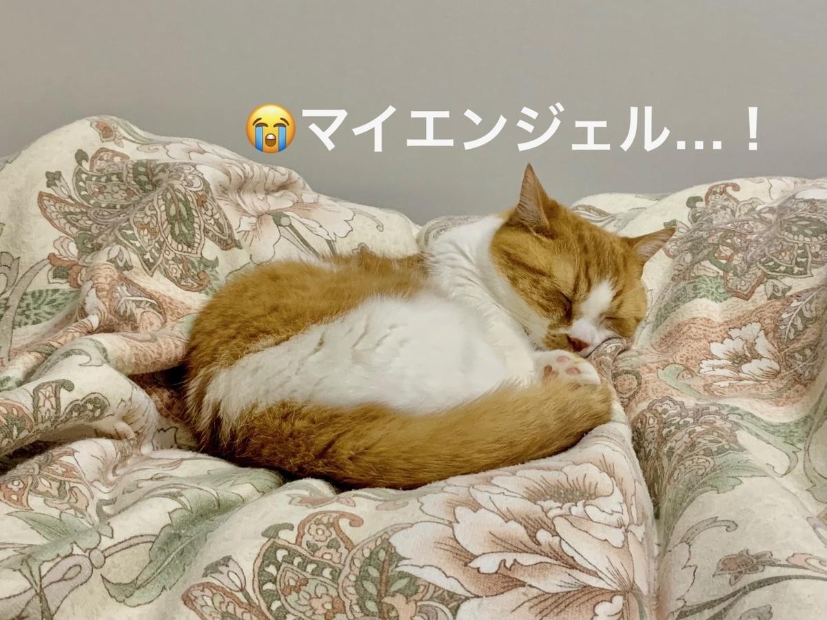 天使の寝顔のるるちゃん1