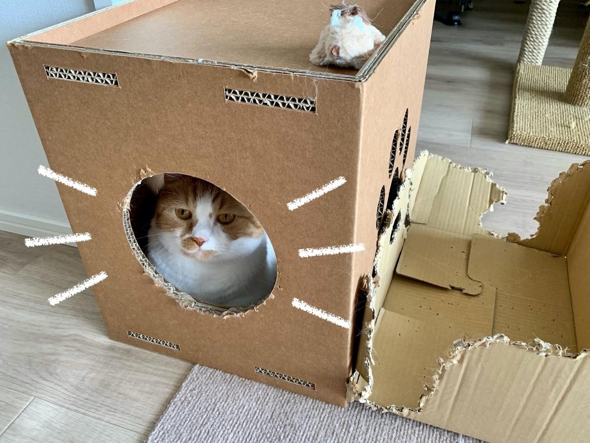 キャットタワーの箱に入るるるちゃん