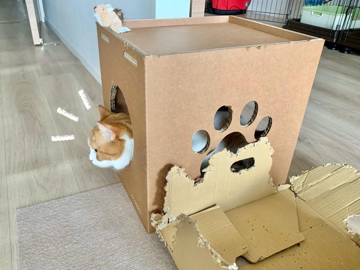新しい箱に入ってくれたるるちゃん1