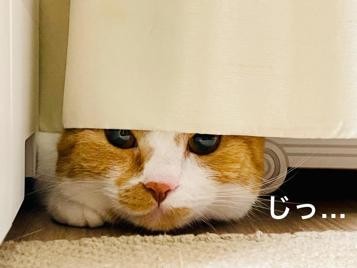 カーテンに隠れるるるちゃん2