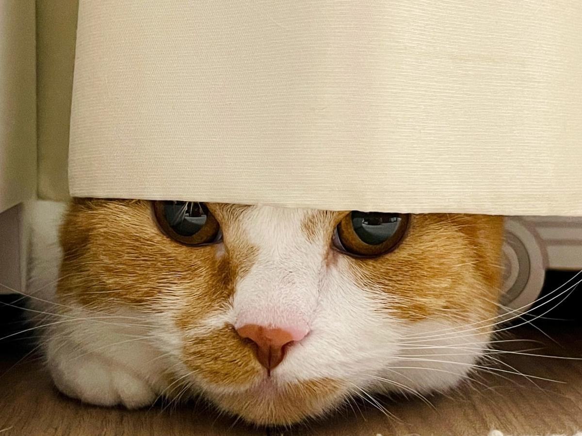 カーテンに隠れるるるちゃん3