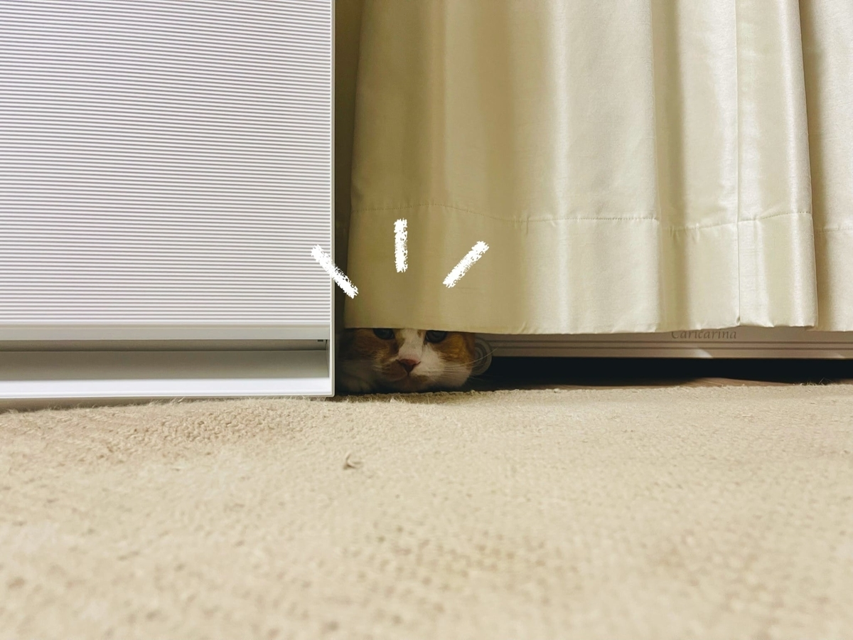 カーテンに隠れるるるちゃん1