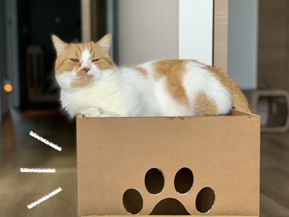 箱の上でまったりするるるちゃん